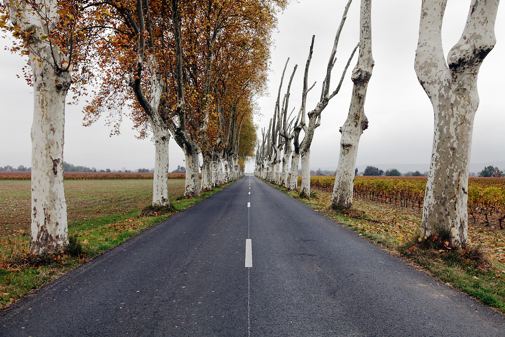 rural countryside road with pruned trees France Languedoc