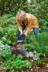 Carol klein adding leaf mould to a border