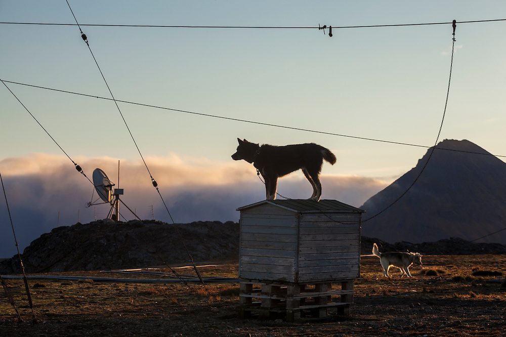 The two station huskies stand on guard (against polar bears) at the Polish Polar Station in Hornsund, Svalbard.