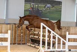 Tennessee van de Ravershoek, Smout Jelle<br /> The Special Free Jump Contest - Lubbeek 2021<br /> © Hippo Foto - Dirk Caremans16/10/2021