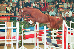 , 26- Holsteiner Körung 31.10. - 03.11.1996, 042 - Francesco
