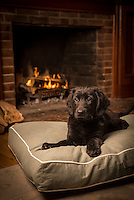 Cute black puppy sits in front of the fire on a Dog Gone Smart Pet Products' Classic Rectangle Bed.