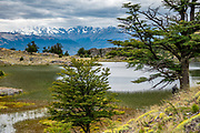 One of the high lakes of the Lagunas Altas Trail, in Patagonia National Park, near Cochrane, Chile, South America. Starting from Los West Winds Campground, we hiked the Lagunas Altas Loop Trail (21 km round trip with 1100 m cumulative gain). Intensive ranching on this former estancia caused overgrazing, but through restoration and rewilding, native grasslands have recovered and wildlife has returned. Top-notch park infrastructure includes a lodge, restaurant, visitor center and museums, as well as campgrounds and trails. Patagonia National Park consists of the Tompkins Conservation donation in addition to the former national reserves of Jeinimeni and Tamango, plus fiscal land. Parque Patagonia was created by Conservacion Patagonica, a nonprofit incorporated in California and founded in 2000 by Kris Tompkins. On January 29, 2018, Chilean President Michelle Bachelet and Kris Tompkins signed a decree creating 5 national parks, including Patagonia National Park.