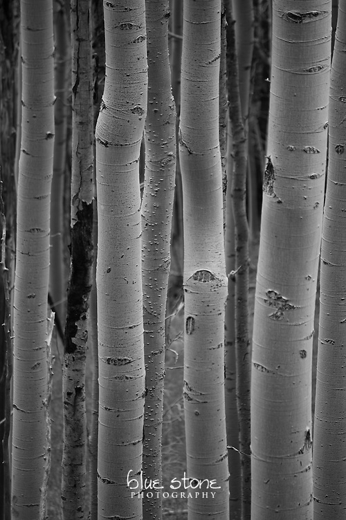 The simplicity of summer aspens in black and white creates a sense of peace amidst nature.<br /> <br /> Wall art is available in metal, canvas, float wrap and standout. Art prints are available in lustre, glossy, matte and metallic finishes.