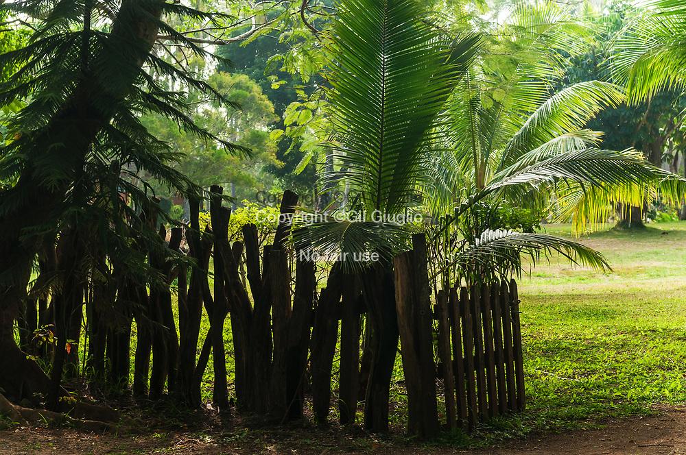Nouvelle Calédonie, Province sud,  Île des Pins, végétation endémique à  Ouara // New Caledonia, French Pacific territory, Province sud, Isle of Pins, endemic vegetation at Ouara town