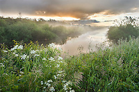Dawn light over wetland habitat in Nemunas Regional Reserve, Lithuania. Mission: Lithuania, June 2009