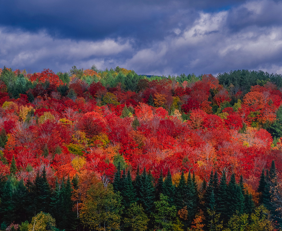 Sun & shadows play across hillside of fall foliage, Groton, VT