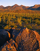 Spiral petroglyph, Signal Hill, Saguaro National Park, Arizona.