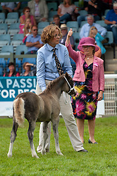 © Licensed to London News Pictures. 24/07/2018. Llanelwedd, Powys, UK. Judging of the 'Filly Foal' Class Section A takes place in the Main Ring on the second day of the Royal Welsh Agricultural Show. The Royal Welsh Agricultural Show is hailed as the largest & most prestigious event of its kind in Europe. In excess of 200,000 visitors are expected this week over the four day show period. The first ever show was at Aberystwyth in 1904 and attracted 442 livestock entries. Photo credit: Graham M. Lawrence/LNP