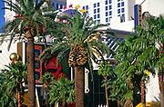 Palm trees and casino, The Strip, Las Vegas, Nevada, USA