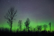The green of northern lights and aspen silhouettes, Northern Vidzeme, Latvia Ⓒ Davis Ulands | davisulands.com