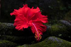 Murni's Houses, Ubud, Bali - The Garden