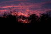 Sunset, winter woodland