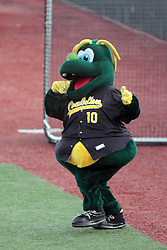 23 August 2014:  Mascot Corny during a Frontier League Baseball game between the Traverse City Beach Bums at Normal CornBelters at Corn Crib Stadium on the campus of Heartland Community College in Normal Illinois