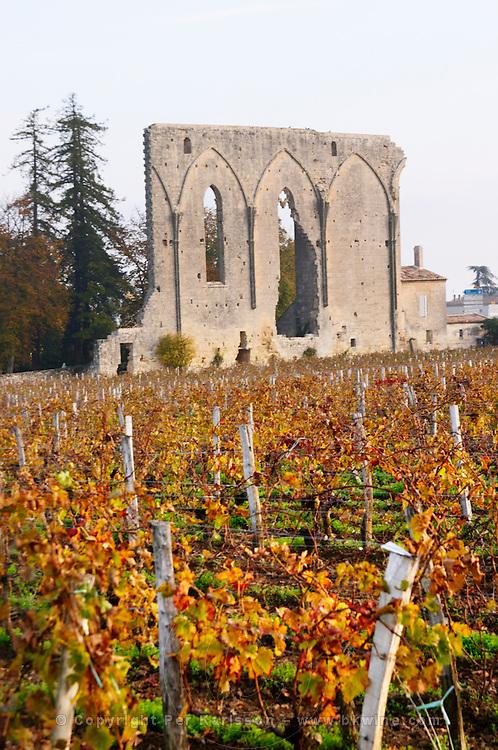 Vineyard. Ruin of a church. Chateau Les Grandes Murailles, Saint Emilion, Bordeaux, France