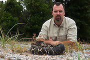 Timber Rattlesnake (Crotalus horridus) - Black morph<br /> & Chris Jenkins<br /> Northern Georgia<br /> USA<br /> HABITAT & RANGE: Deciduous forests in rugged terrain and open, rocky ledges. Eastern USA