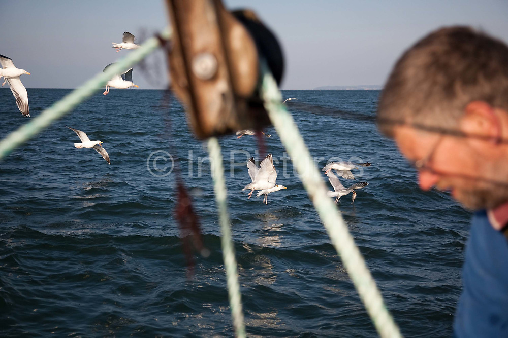 Sea gulls diving for scraps thrown off the boat where Richard is pulling in and emptying lobster pots.<br /> Sustainable fishing methods and small scale fisher men syndicates are now common along the British coast. In Christchurch Bay a small band of fisher men catch their fish, lobsters, cuttlefish and crabs from small boats. They all fish according to the latest environmenttal guidance to keep their fishing as sustainable as possible. They then sell their catch as a syndicate to big export companies or fish shops in cities like London.