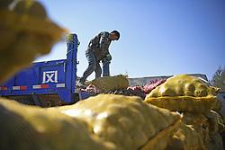 October 4, 2018 - Guyuan, China - A farmer unloads bags of potatoes in Huoshizhai Township of Xiji County of Guyuan City, northwest China's Ningxia Hui Autonomous Region, Oct. 4, 2018. After years of development, industries of processing potato starch, vermicelli and chips have been built in Xiji. (Credit Image: © Wang Peng/Xinhua via ZUMA Wire)