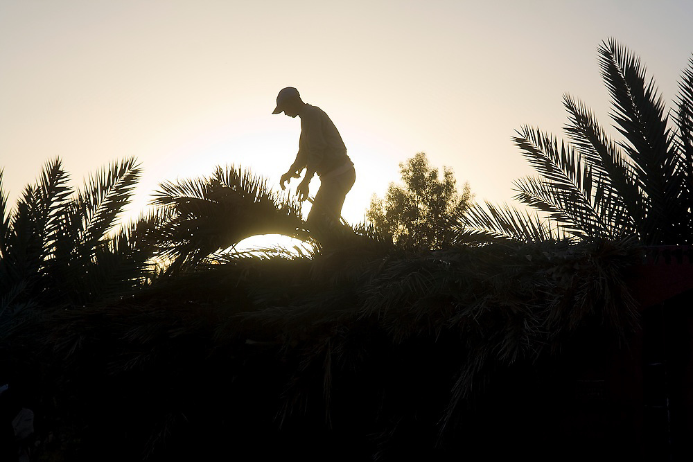 A young man drops palm tree branches pruned from trees on the grounds of a hotel and campground outside the village of Ouled Driss, Morocco.