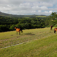 Europe; Ireland; Enniskerry; Horses of Wicklow.