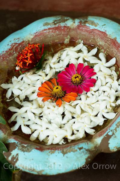 Flowers floating, Sri Lanka.