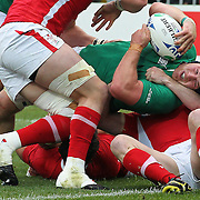 Sean O'Brien, Ireland, is held up over the line by Welsh tacklers Danny Lydiate, (legft) and Shane Williams during the Ireland V Wales Quarter Final match at the IRB Rugby World Cup tournament. Wellington Regional Stadium, Wellington, New Zealand, 8th October 2011. Photo Tim Clayton...