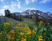 Lupine, Paintbrush,Groundsel and Corn Lily,Stanislaus National Forest, California