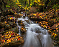 Intimate stream shot with freshly fallen leaves in Acadia National Park, Maine