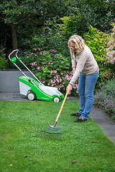 Raking over clover in a lawn before mowing so it is lifted and gets properly cut.