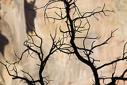 silhouette of tree branches against a rock formation