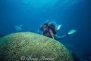 giant brain coral, Colpophyllia natans, Biscayne National Park, Key Biscayne, Upper Florida Keys, off Miami, Florida ( Western Atlantic Ocean )