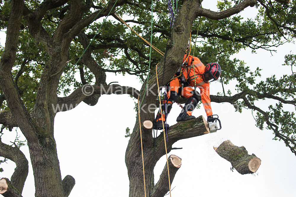 A tree surgeon working with the National Eviction Team on behalf of HS2 Ltd fells a 200-year-old oak tree alongside the East West Rail route known locally as the '7 Sisters Oak' as part of works connected to the HS2 high-speed rail link on 23 September 2020 in Steeple Claydon, United Kingdom. A small group of local people and anti-HS2 activists based at the nearby Poors Piece Conservation Project watched the felling of the tree, which was home to bats and other species, whilst monitored by a joint force of around fifty bailiffs, security guards and police officers from Thames Valley Police.