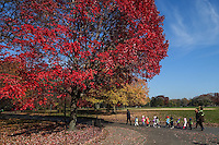 A line of toddlers on a rope under a vibrant red Maple tree at The Great Lawn in Central Park.