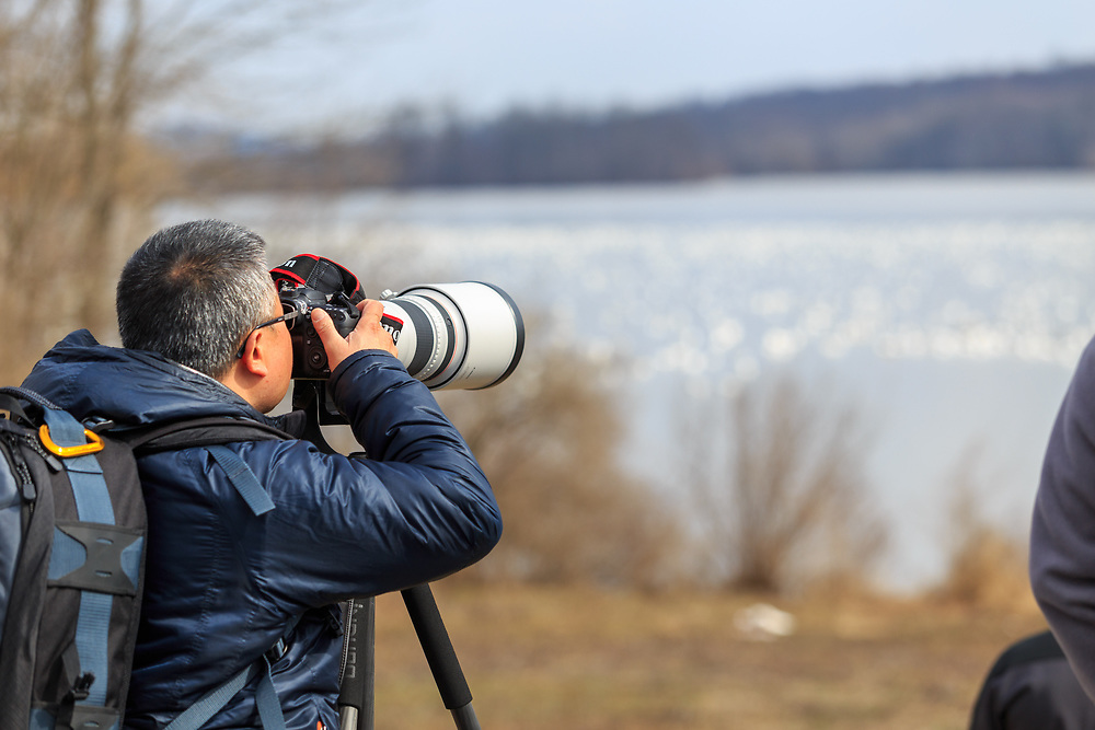 A photographer takes pictures of migrating snow geese at the Middle Creek Wildlife Management Area, located at the Lebanon and Lancaster County border in Pennsylvania.