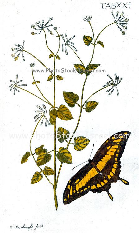 Plantæ rariores vivis coloribus depictæ [Rare plants painted in vivid colors] by Meerburg, Nicolaus (Nicolaas), 1734-1814. Published in 1789