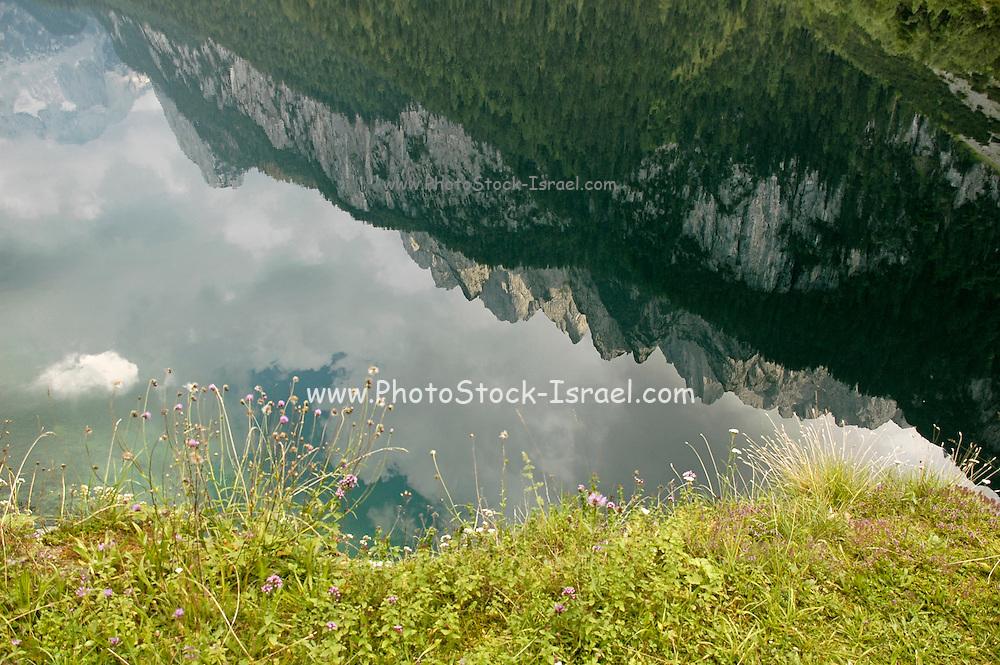 Austria, Upper Austria, Gosau, Lake Gosau in the Dachstein Mountains. The mountains reflecting in the still clear water