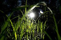 Puszcza Bialowieska, 21.05.2020. N/z sloneczny poranek w Puszczy Bialowieskiej fot Michal Kosc / AGENCJA WSCHOD