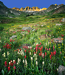 Classic vertical image of summer grass and wildflowers in American Basin, Colorado, near Lake City and Ouray, just below Engineer Pass with deep golden early morning light illuminating the Rocky Mountains in background