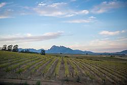 March 6, 2015 - Stellenbosch, Western Cape, South Africa - Stellenbosch, South Africa  (Credit Image: © Edwin Remsberg/VW Pics via ZUMA Wire)