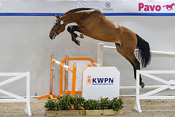 023, Nigel<br /> KWPN Hengstenkeuring 2021<br /> © Hippo Foto - Dirk Caremans<br />  02/02/2021