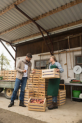 Wholesale purchaser buying apples in organic farm, Bavaria, Germany
