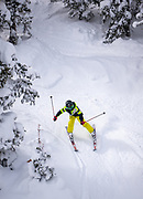 A skier dips through the trees on a February powder day at Monarch Mountain.