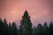 Alpen glow on mountains with trees in foreground