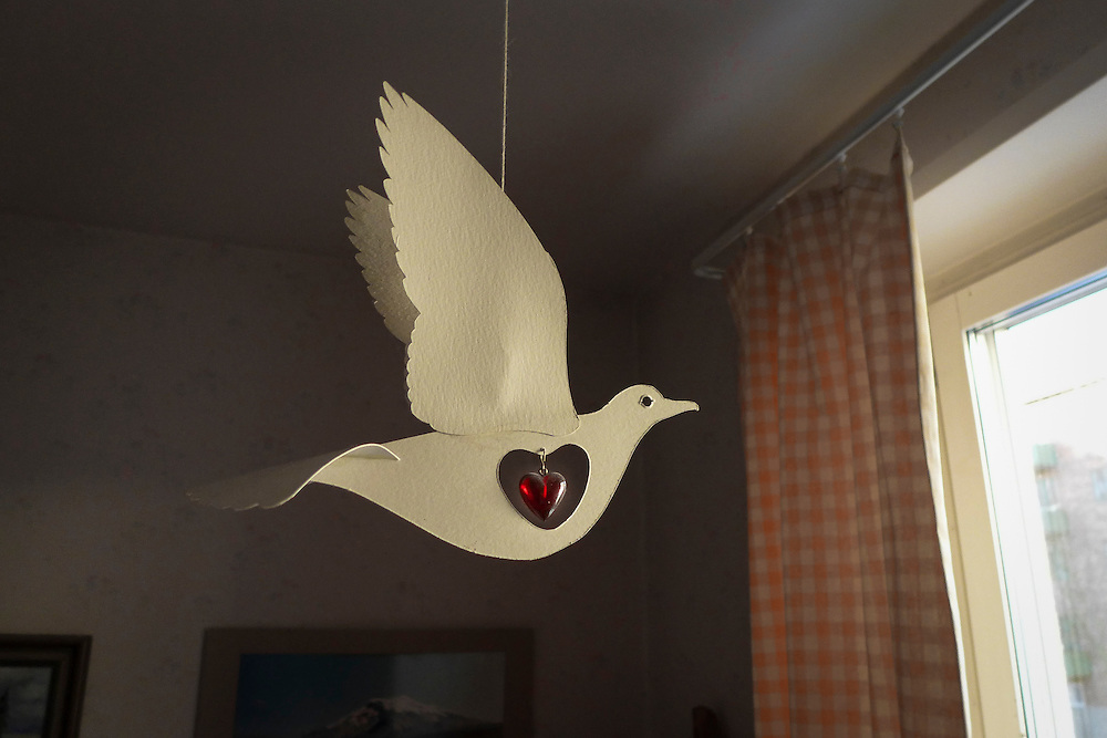 Bird for peace and love