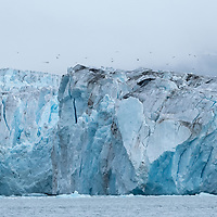 Birds fly over the Nordenskjold Glacier in Cumberland East Bay on the north coast of South Georgia Island. A heart-shaped piece of ice can be seen on the face of the glacier.