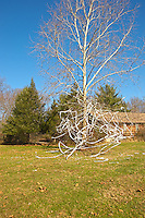 Toilet Papered Tree. Image taken with Nikon D2xs and 18-200 mm VR lens.