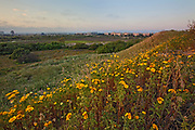 Ballona Wetlands is one of the last remaining wetlands in the Los Angeles Basin, Playa Del Rey, Los Angeles, California, USA