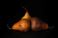 Old but still good.<br /> Very ripe Bosc Pears, made it through the winter.
