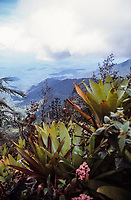 A rare view out of the rainforest during the ascent of Pico da Neblina - Brazil's highest mountain.