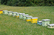 A row of beehives in a meadow. Teth, Tethi, Albania. 0Sep15
